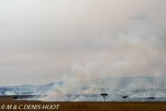 feu de brousse / bushfire