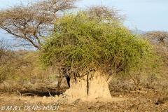 termitière / termite hill