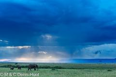 réserve de Masai-Mara / Masai-Mara game reserve