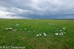 champignon / mushroom
