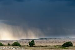 migration des gnous / wildebeest migration