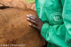 orphelinat des éléphants / elephant orphanage